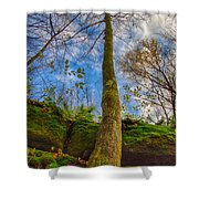 Tree And Rocks Shower Curtain