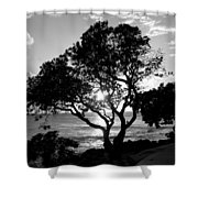 Tree And Sun Shower Curtain