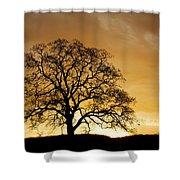 Tree At Golden Sunrise Shower Curtain