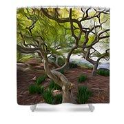 Tree At Norfolk Botanical Garden Shower Curtain