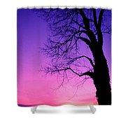 Tree At Sunrise Shower Curtain