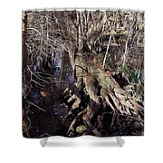 Tree Roots At The River Shower Curtain