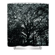 Tree Black And White Shower Curtain