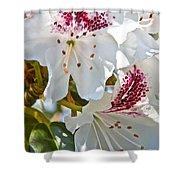 Tree Blossom Shower Curtain