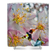 Tree Blossom Shower Curtain