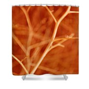 Tree Branches Abstract Orange Shower Curtain
