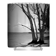 Tree By The Sea Shower Curtain