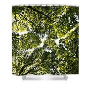 Tree Canopy Shower Curtain