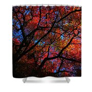 Tree Color Blast Shower Curtain