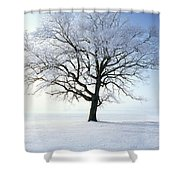 Tree Covered In Hoar Frost Shower Curtain