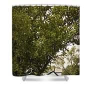 Tree Covered Shower Curtain