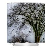 Tree Elder Shower Curtain
