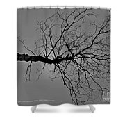 Tree Fall Shower Curtain