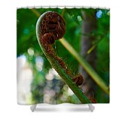 Tree Fern Shower Curtain