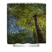 Tree Ferns From Below Shower Curtain