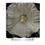 Tree Flower Shower Curtain