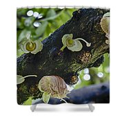 Tree Flowers Shower Curtain