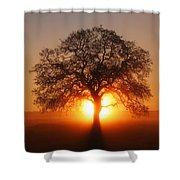 Tree Fog Sunrise Shower Curtain