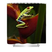 Tree Frog 3 Shower Curtain