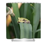 Tree Frog Up Close Shower Curtain