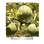 Tree Fruit Shower Curtain
