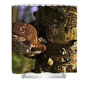 Tree Fungus  Shower Curtain