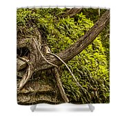 Tree Grows From Rock Outcrop Shower Curtain