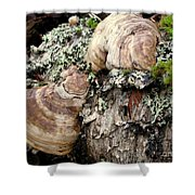 Tree Growths Shower Curtain