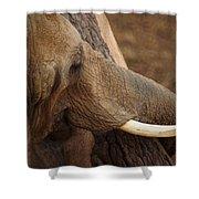 Tree Hugging Elephant Shower Curtain