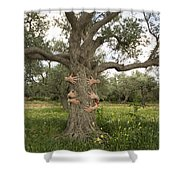 Tree Hugging Green Ecological Concept  Shower Curtain
