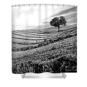 Tree In A Mowed Field. Auvergne. France Shower Curtain