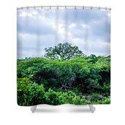 Marula Tree In African Sky Shower Curtain