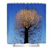 Tree In Afternoon Sunlight Shower Curtain