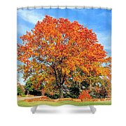 Tree In Autumn Shower Curtain
