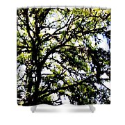 Tree In Blue Ridge Mountains Shower Curtain