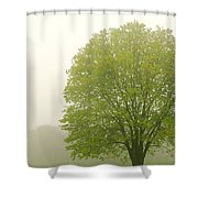 Tree In Fog Shower Curtain by Elena Elisseeva
