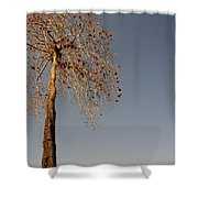 Tree In India Shower Curtain