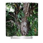 Tree In Kauai Shower Curtain