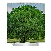 Tree In Nature Shower Curtain