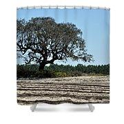 Tree In Plowed Field Shower Curtain