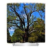 Tree In Rock Hill Shower Curtain
