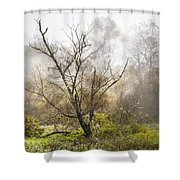 Tree In The Fog Shower Curtain