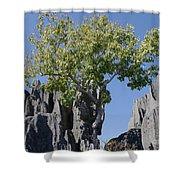 Tree In The Tsingy De Bemaraha Madagascar Shower Curtain
