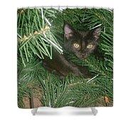 Tree Kitten Shower Curtain