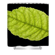 Tree Leaf Shower Curtain
