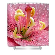 Tree Lily Upclose With Ant Shower Curtain
