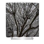 Tree Limb 4 Shower Curtain