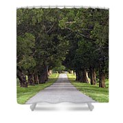 Tree Lined Drive - D008564 Shower Curtain