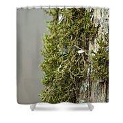 Tree Moss Closeup 2013 Shower Curtain