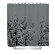 Tree Of Birds Shower Curtain